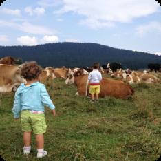 archivio-apt-valsugana---adotta-una-mucca---al-pascolo
